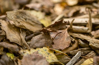 Foliage and old wood are scattered on the forest floor