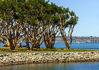 A very beautiful landscape in San Diego