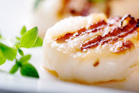 Grilled scallops with thyme leafs