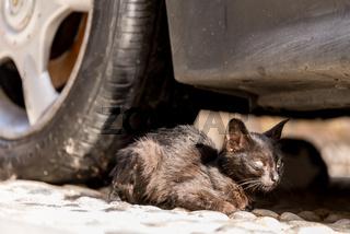 Streunende Katze versteckt sich in ihrem Zufluchtsort