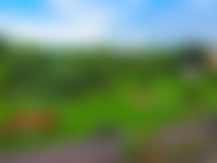 blurred blue sky green trees and brown earth background