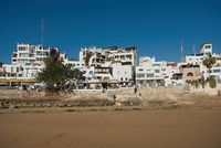Dakhla, MOROCCO - JANUARY 18, 2020: a brown seagull in front of the ocean with houses in the background