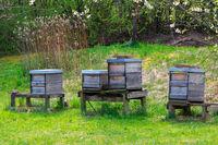 Beekeeping with a wooden beeyard