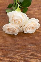 Close up of three white roses lying on wooden background