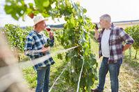 Weinbauern bei einer Weinprobe im Weinberg