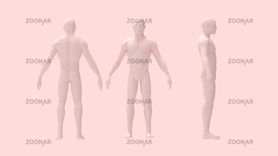 3D rendering of a human person body anatomy skin colore isolated