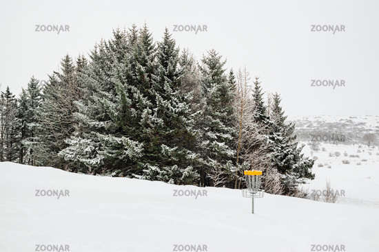 Trees under the snow and disk golf, Iceland