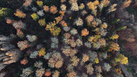 Top down view of a mixed forest in autmun colors - aerial view