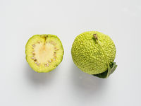 Green fruit of maclura, osage orange