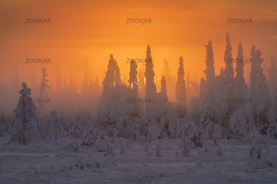 foggy mood, Muddus NP, Lapland, Sweden