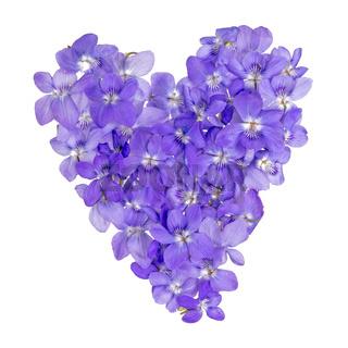 Herz aus durcheinander liegenden kleinen, violetten Veilchenblüten freigestellt auf weiß