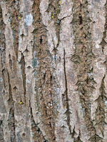 close-up of tree bark with space for text or image