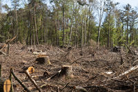 Storm damage and dry damage in the forest
