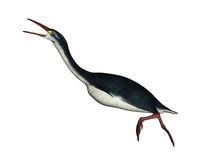 Hesperornis prehistoric bird - 3D render