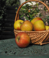 Rustic organic apples in a wicker basket on a green garden table