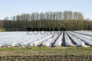Folientunnel ueber einem Erdbeerfeld