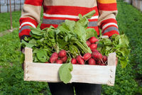 Woman holding container of organic grown radish