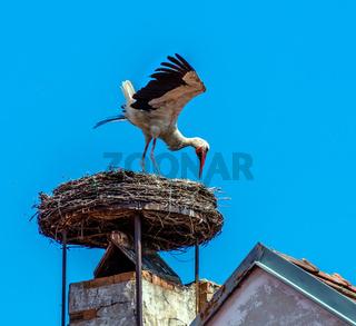 Österreich, Rust. Nest von einem Storch