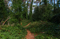 Path inside the forest of Villa Gesell