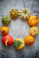 From above view of various kinds cute mini pumpkins placed in circle with space with copy space