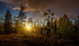 Panorama of a forest landscape at beautiful sunset