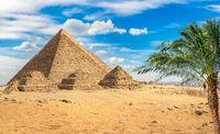 Pyramids and palm tree