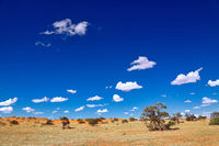 Landscape at Kgalagadi Transfrontier National Park, South Africa