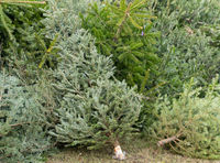 Christmas tree disposal after Christmas, Waste disposal
