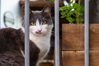Cat lying behind a barred fence of a house in old Nicosia, Cyprus