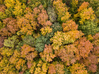 Aerial woods view from a drone in autumn yellow, orange and green colors.