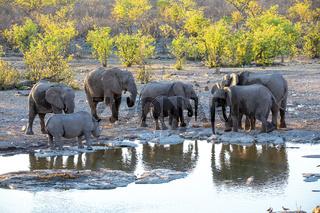 rhino and elephant at Etosha National Park, Namibia