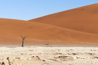 Dunes and dead acacia trees in the Namib desert, Dead Vlei, Sossusvlei, Namibia, Africa.
