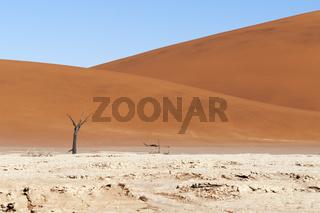 Tote Akazienbaeume und Duenen in der Namib Wueste