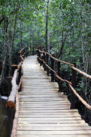 Wooden bridge in the mangrove forest in Zanzibar. Tanzania