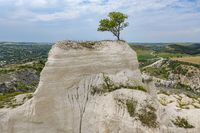 Lonely tree at limestone quarry in Moldova