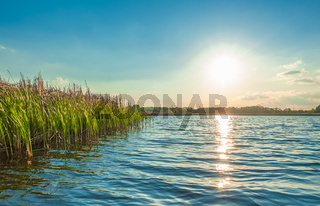 landscape view of the beautiful Kamenka river with thicket of reeds in the Zhytomyr region of Ukraine