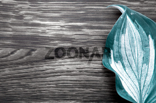 Green leaves on gray wooden background.Copy space
