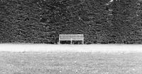 Solitary bench with a large hedge in the background