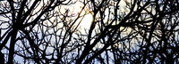 Silhouetten von kahlen Ästen im Gegenlicht der Wintersonne