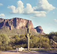 Arizona landscape with Saguaro Cactus