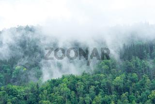 Nebel in den Hügeln und Wäldern des Ennstal bei Großraming