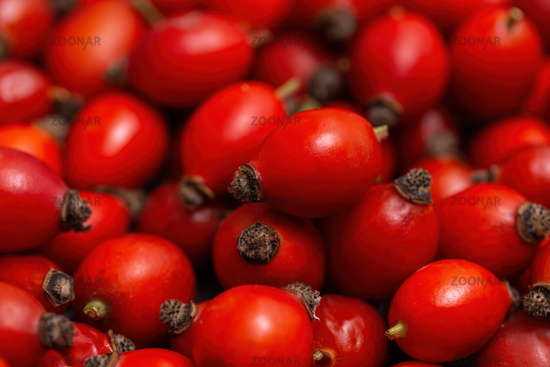 Freshly picked pile of rose hips, rosa canina, in autumn in detail.