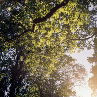 Tree branches in a forest at sunset. Shot on analog medium format film