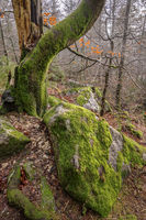 Stony forest - Big Waldstein in the Fichtelgebirge mountains
