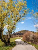 Strreet towards Marzer Kogel in Burgenland in Spring