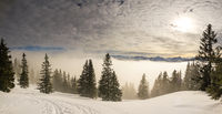 Snow covered mountains with inversion valley fog and trees shrouded in mist. Panoramic snowy winter landscape in Alps at sunrise morning. Allgau, Kleinwalsertal, Bavaria, Germany.