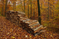 wood pile in the autumn forest