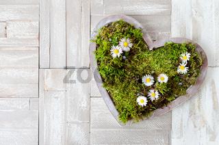 Herz  mit Gänsebluemchen