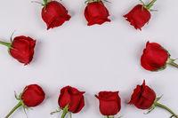 Red roses frame on white