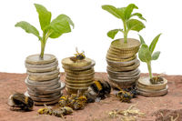 Small plants grow from stacked money coins on a sandstone with dead insects